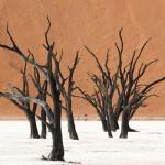 scuolaromanafotografia-improta-alberi